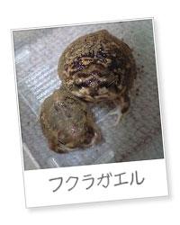 20120309fukura