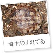 20120323fukura